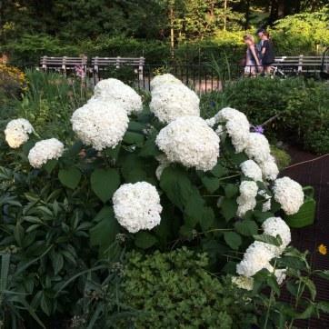 Flowers in the Riverside Drive gardens.
