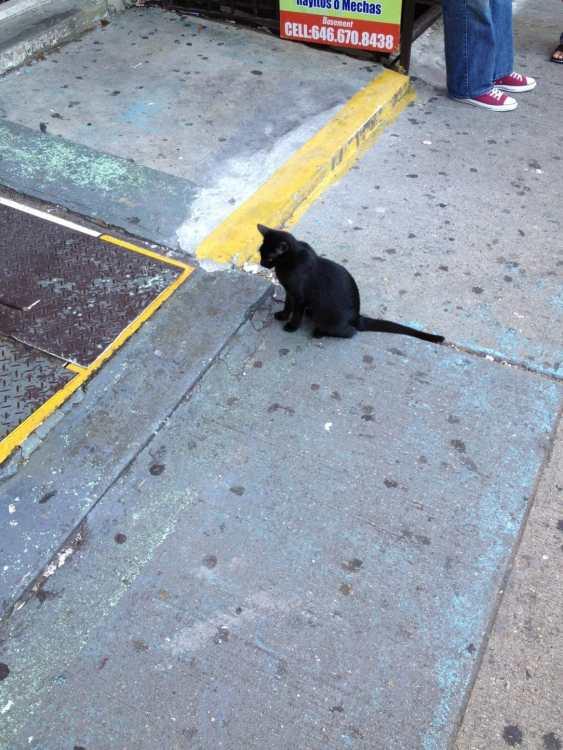 Black Cat on Audubon Ave 1
