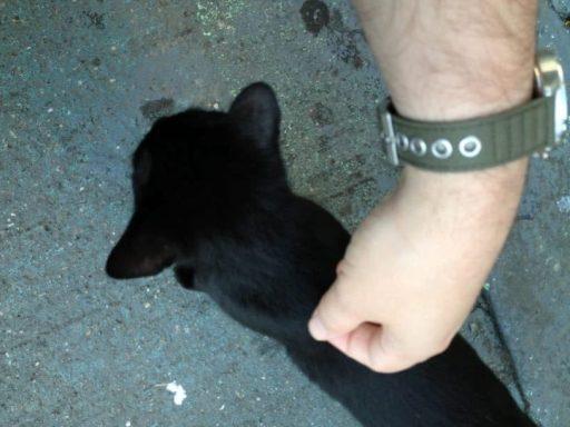 Black Cat on Audubon Ave 2